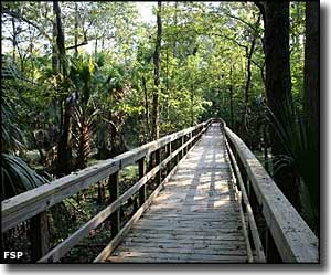 The boardwalk on the Swamp Trail