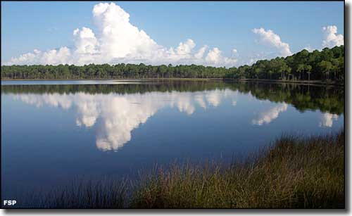 Open water surrounded by sawgrass and forest