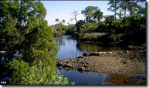 A waterway at Werner-Boyce Salt Springs State Park