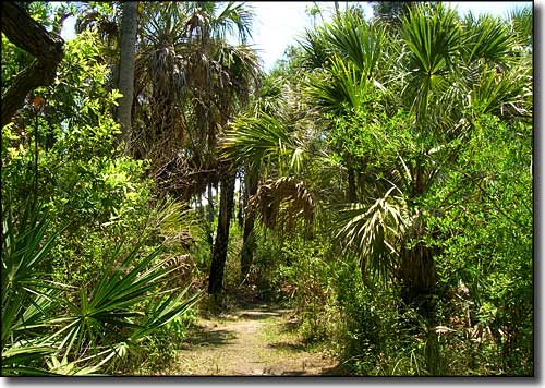 Nature Trail at Werner-Boyce Salt Springs State Park