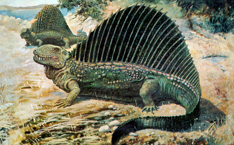 Image of a dimetrodon of the Permian Era