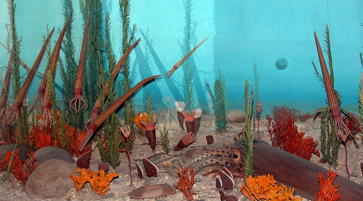 Lifeforms typical in the Ordovician Period