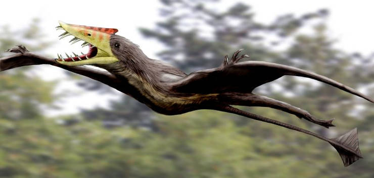 Rendition of sericipterus, an avian dinosaur
