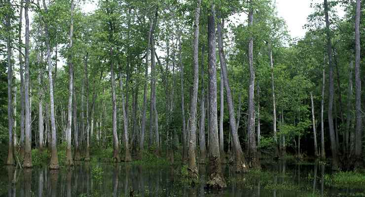 Bond Swamp National Wildlife Refuge