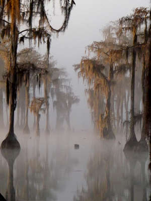 A view through the morning fog at Banks Lake National Wildlife Refuge