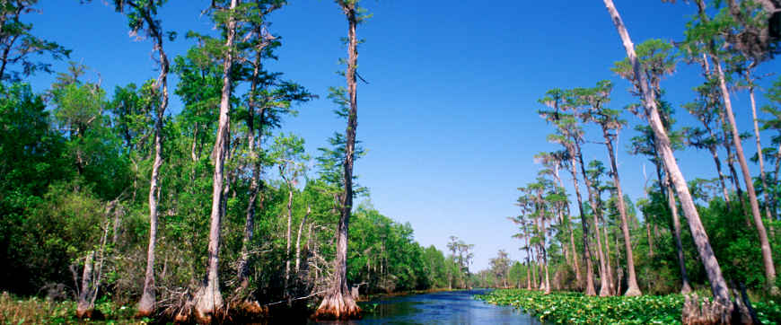 Navigating a stream through the cypress bogs in the Okefenokee Wilderness