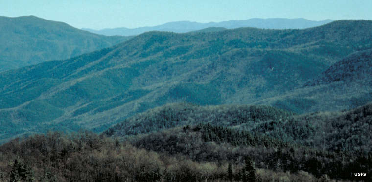 A view at Cohutta Wilderness