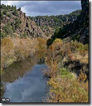 Riparian area in the Owyhee Uplands
