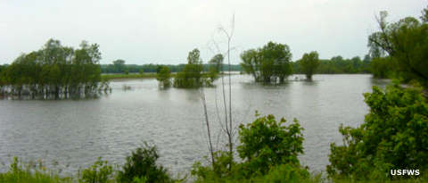 Middle Mississippi River National Wildlife Refuge in high water