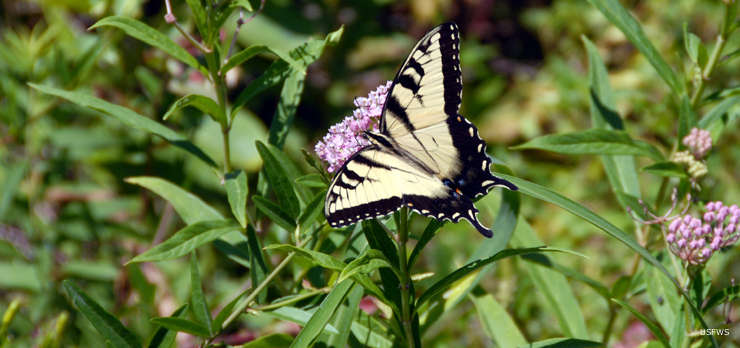 A butterfly at Patoka River National Wildlife Refuge