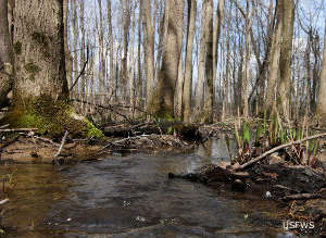 Wetland at Patoka River National Wildlife Refuge