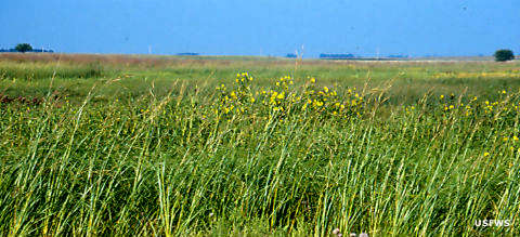 Tallgrass prairie at Iowa Wetland Management District