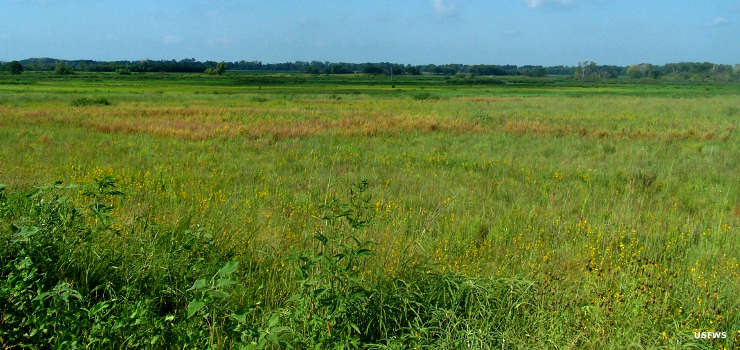 Tallgrass prairie at Flint Hills National Wildlife Refuge