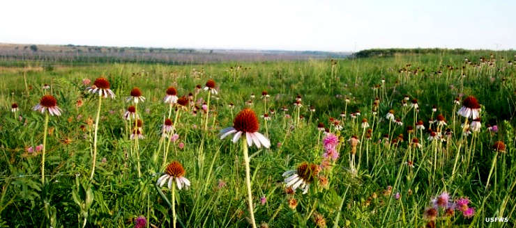 Tallgrass prairie at Kirwin National Wildlife Refuge