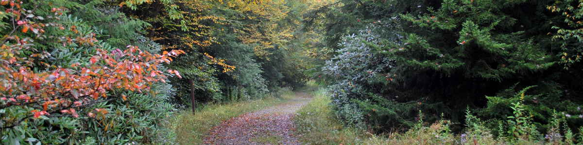 A trail leading into a deciduous forest in the fall