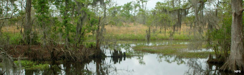 Barataria Preserve at Jean Lafitte National Historical Park
