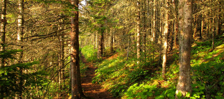 Along a trail on Isle Royale