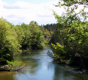 A view of the Manistee National Scenic River