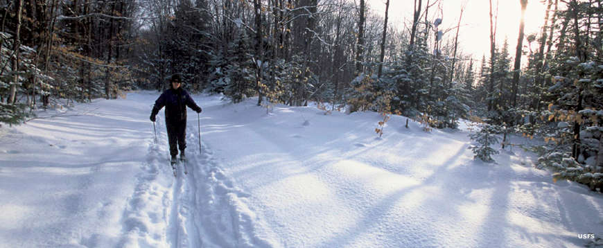 A cross-country skier on a trail in the forest