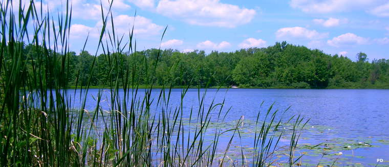 Benton Lake on Manistee National Forest