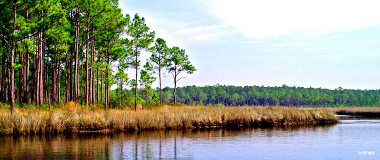A view on Grand Bay NWR