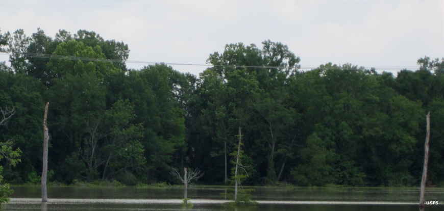 Flooded bottomland hardwoods at Delta National Forest