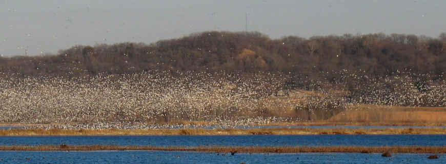 A cloud of snow geese at Loess Bluffs National Wildlife Refuge