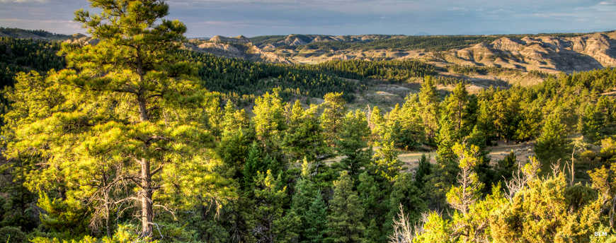 A view of a treed landscape in the highlands of Upper Missouri River Breaks National Monument