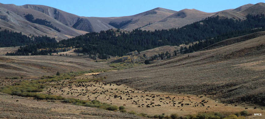Cattle grazing in a meadow below high mountains in the Ashland Ranger District