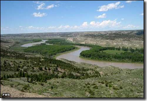 The riparian area along the Missouri River