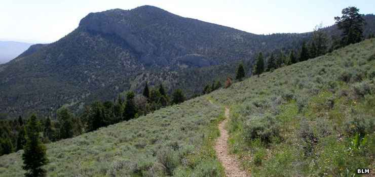 Looking up a trail in Highland Ridge Wilderness
