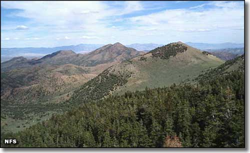 Red Mountain Wilderness, Humboldt-Toiyabe National Forest