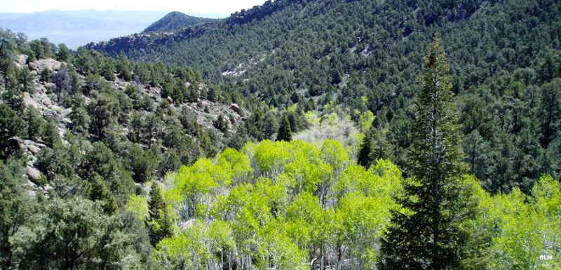 Looking over a stand of aspens and down through a valley in the Fortification Range Wilderness