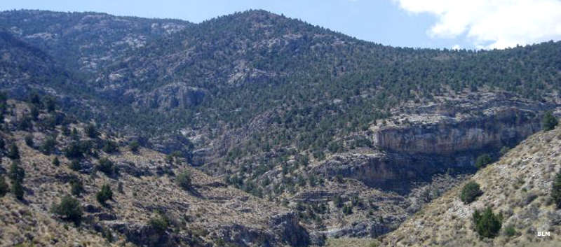 Looking up a canyon into Mount Moriah Wilderness