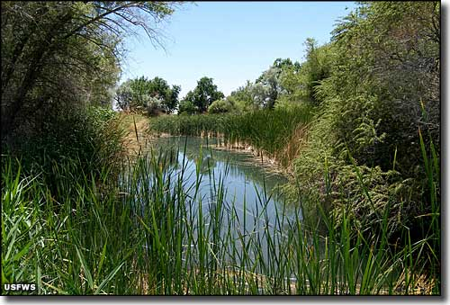 Corn Creek Springs, Desert National Wildlife Refuge