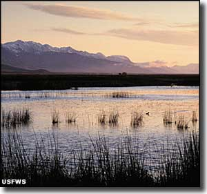 Dawn at Ruby Lake National Wildlife Refuge