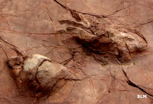 Fossilized footprint from Prehistoric Trackways National Monument