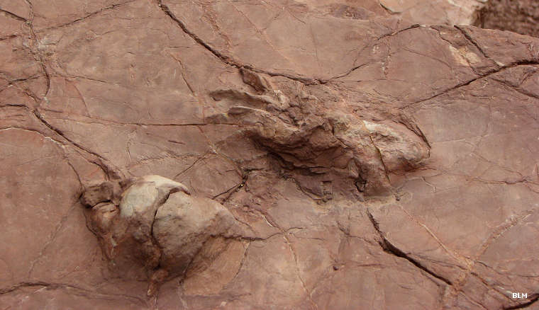 Fossilized dinosaur footprints found at Prehistoric Trackways National Monument