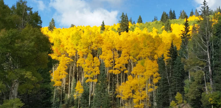 Aspen in color