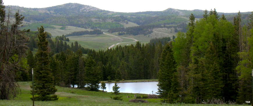 Looking across a small lake to an evergreen-filled valley in the Tusas Mountains
