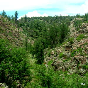 Typical canyon viw in Cibola National Forest