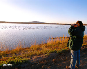Water birds in the early morning at Bosque del Apache National Wildlife Refuge