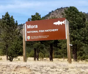 Sign at the entrance to Mora National Fish Hatchery