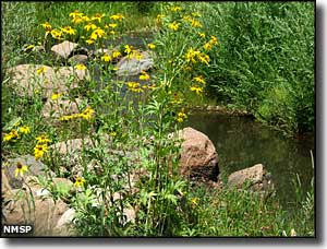 Wildflowers along the stream at Coyote Creek State Park