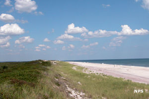 The Primary Dune at Fire Island National Seashore