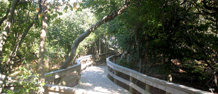 The Nature Trail boardwalk at Watch Hill