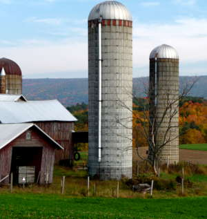 A typical rural view in upstate New York with old barns and a couple silos