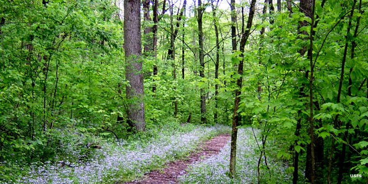 A typical trail in Wayne National Forest