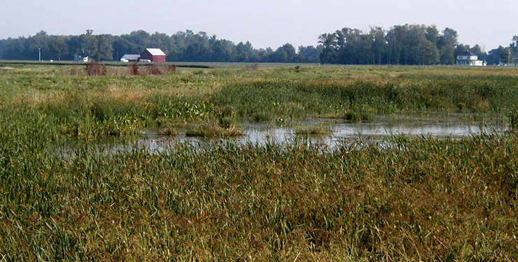 A view at Cedar Point National Wildlife Refuge