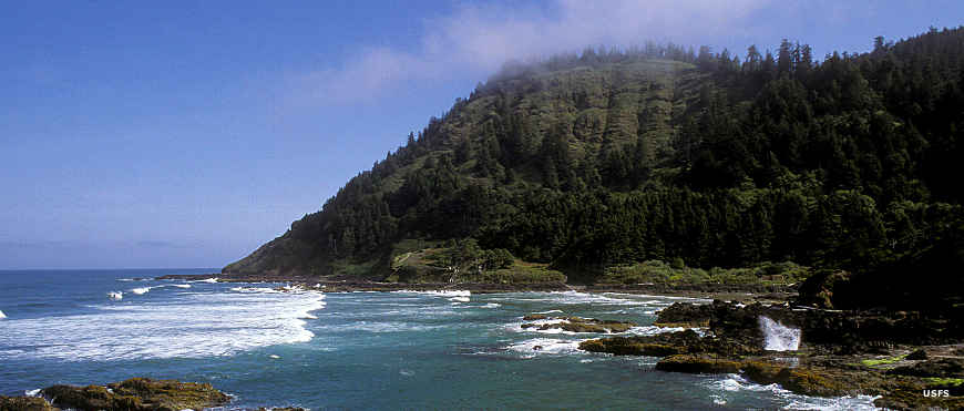A view of the ocean, cliffs and trees at Cape Perpetua on the Oregon coast